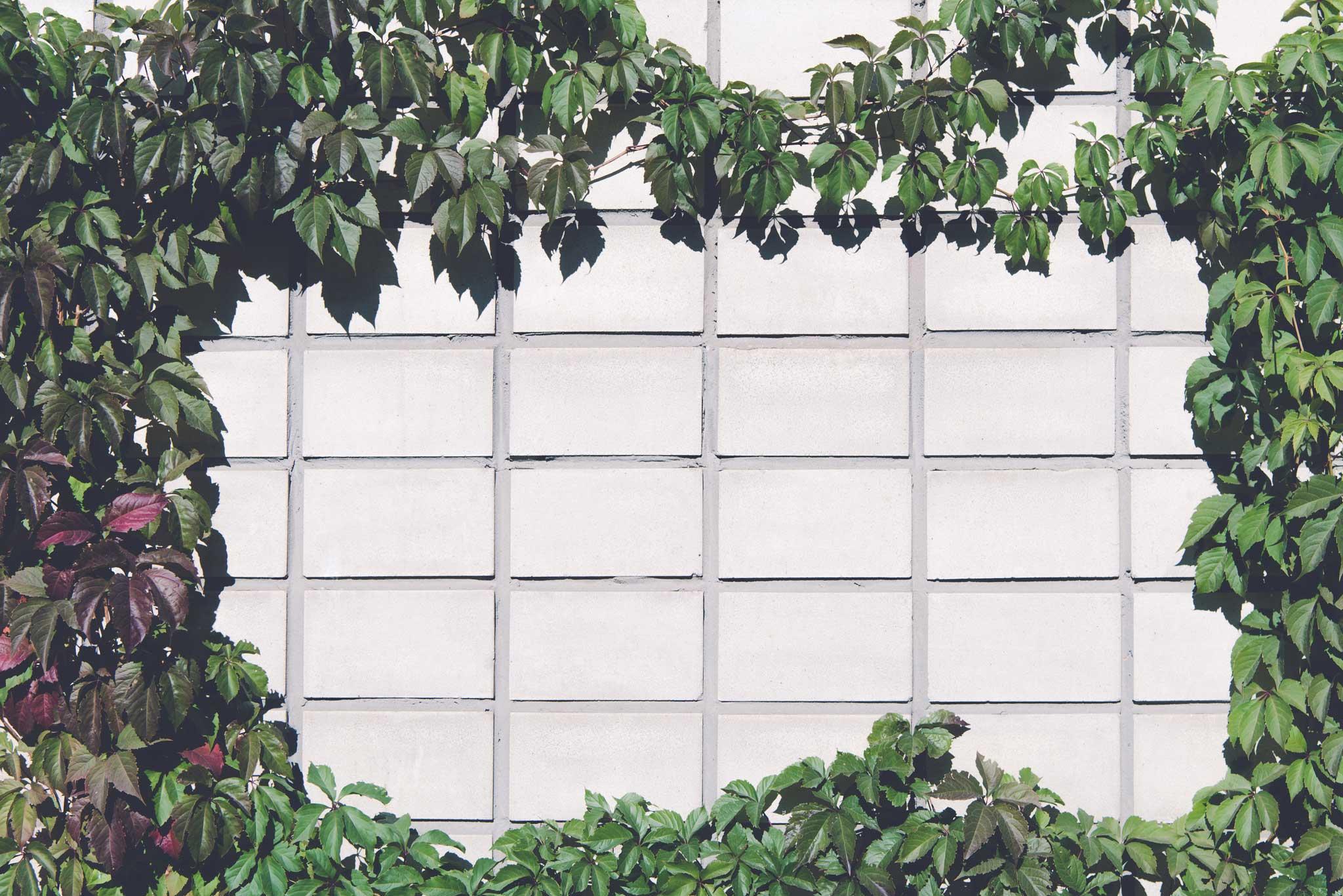 tapet-fototapet-design-decor-mural-customizabil-comanda-personalizat-bucuresti-daring-prints-motiv-model-vegetal-frunze-iedera-perete-beton