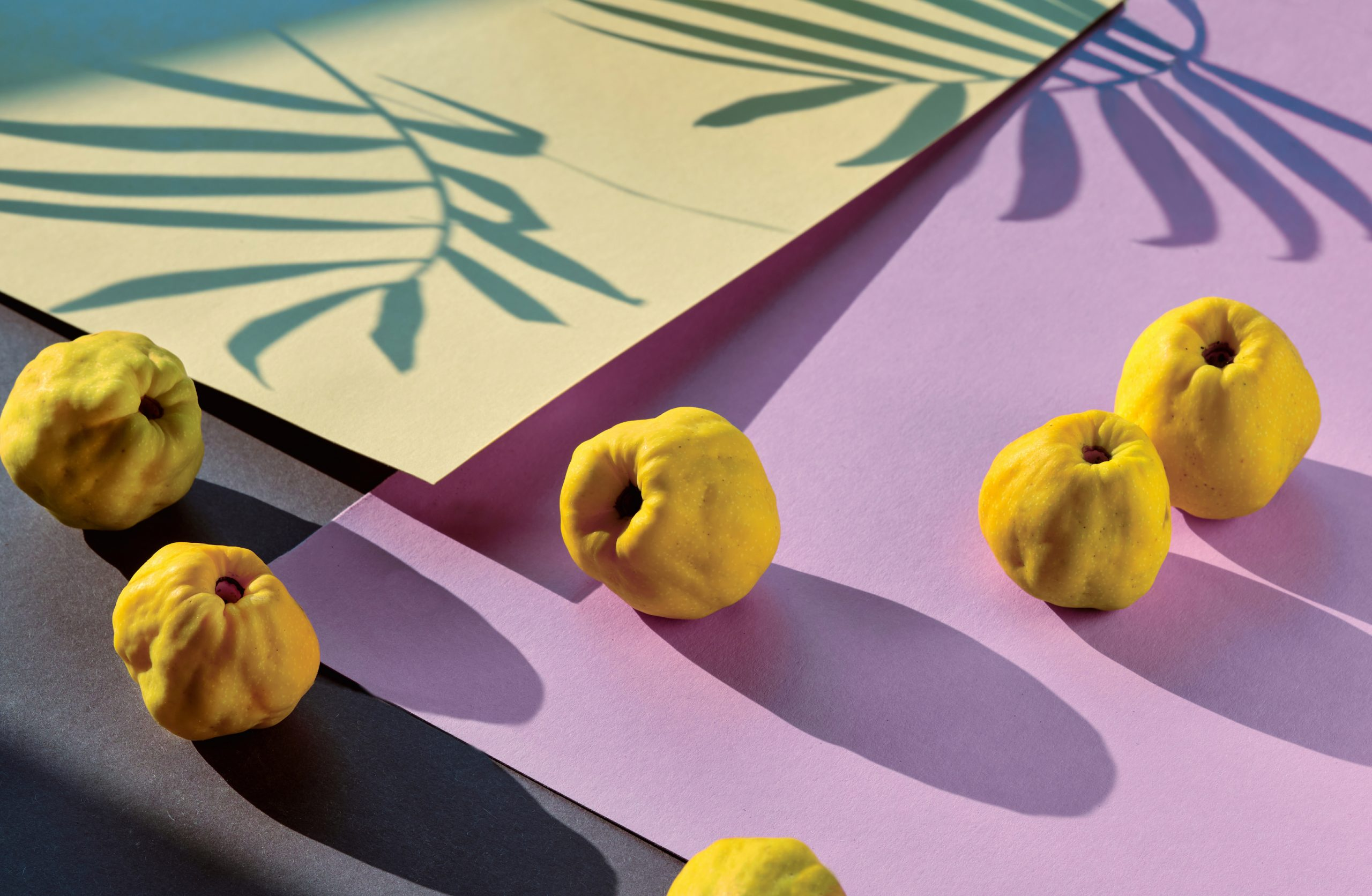 Close-up on ripe sweet Japanese quince fruits on pink and purple geometric layered paper. Long shadows from the fruits and palm leaves. Vibrant yellow, pink and purple Autumn color palette.