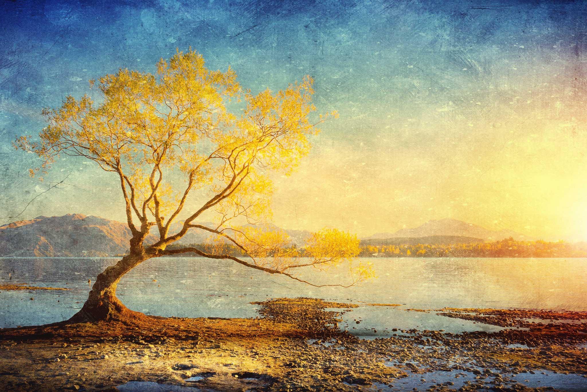 tapet-fototapet-design-decor-mural-customizabil-comanda-personalizat-bucuresti-daring-prints-motiv-model-desen-pictura-peisaj-copac-frunze-galbene